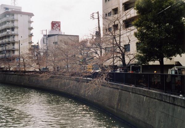 smena8m_20060505sakura-11