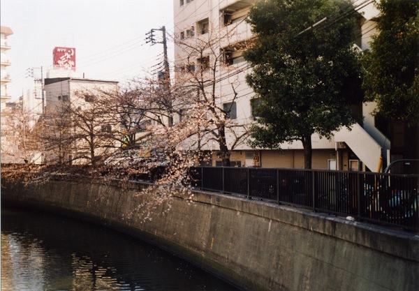 smena8m_20060505sakura-12