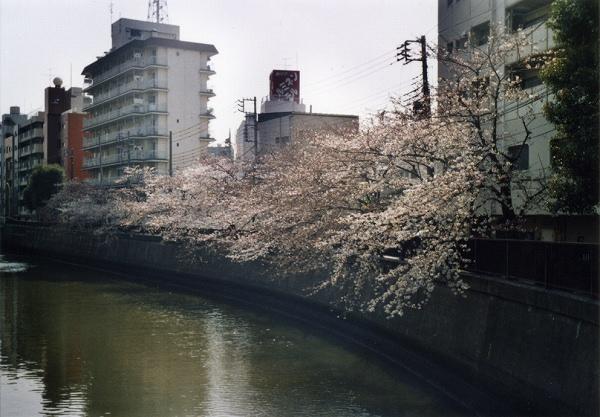 smena8m_20060505sakura-13