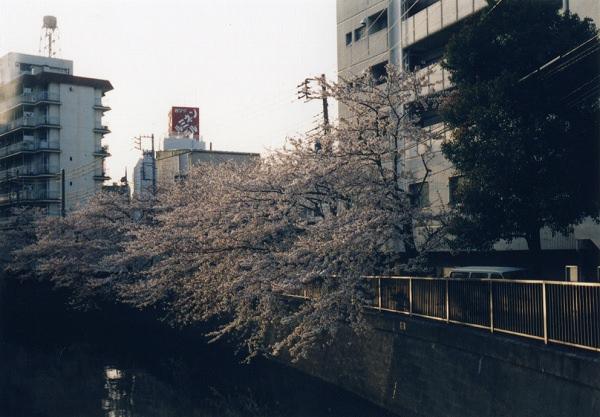 smena8m_20060505sakura-14