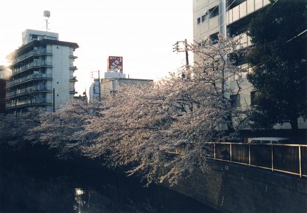 smena8m_20060505sakura-15