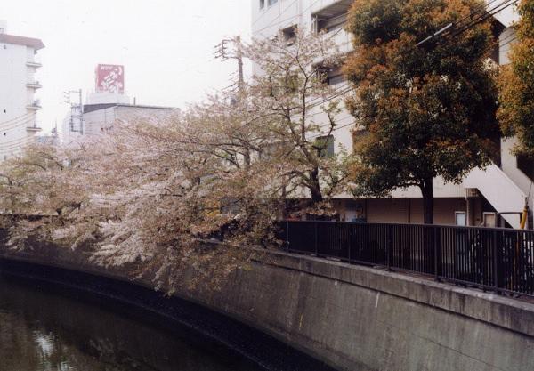smena8m_20060505sakura-16