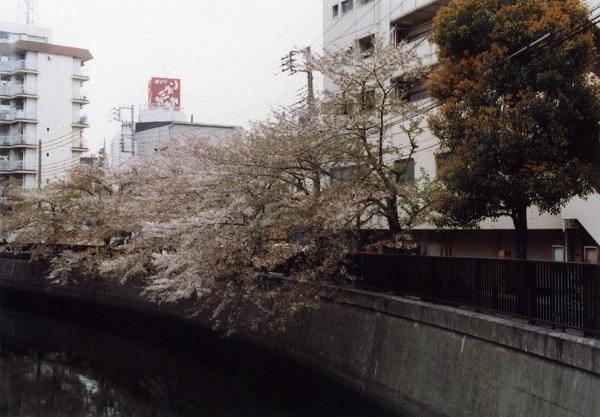 smena8m_20060505sakura-17