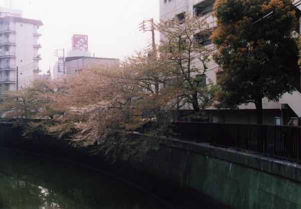 smena8m_20060505sakura-18