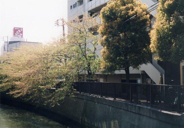 smena8m_20060505sakura-19