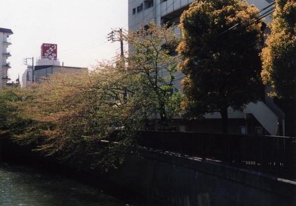 smena8m_20060505sakura-20