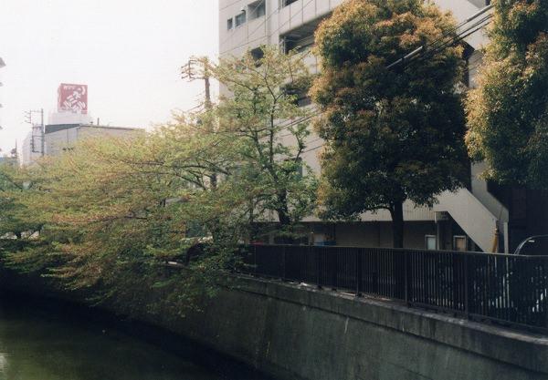 smena8m_20060505sakura-21