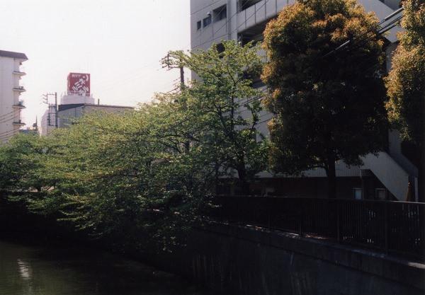 smena8m_20060505sakura-22