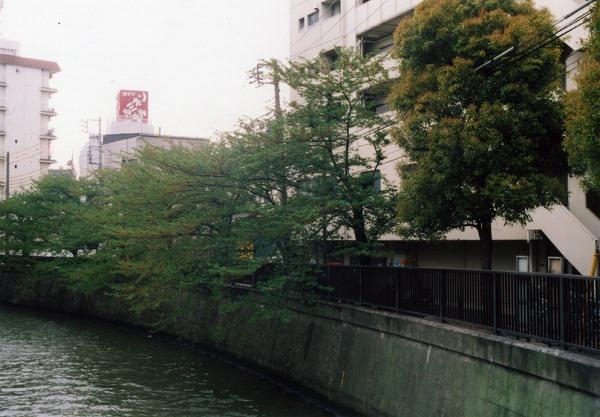 smena8m_20060505sakura-24