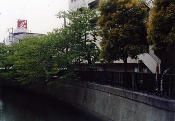 smena8m_20060505sakura-26