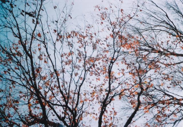 lomo135m_200912toykouyou-08