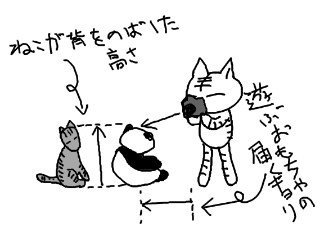 20101230cat_01.jpg