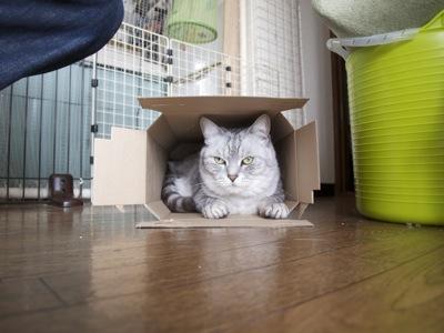 猫GIFJPG