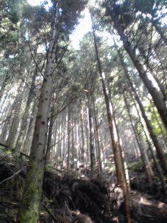 稲村岩から鷹ノ巣山02