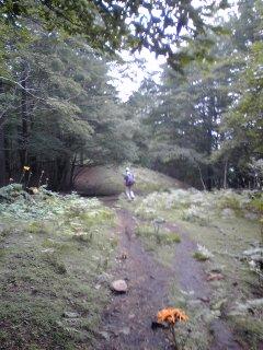 稲村岩から鷹ノ巣山07