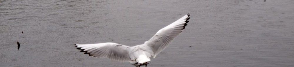20120520e520flybird_01_mini