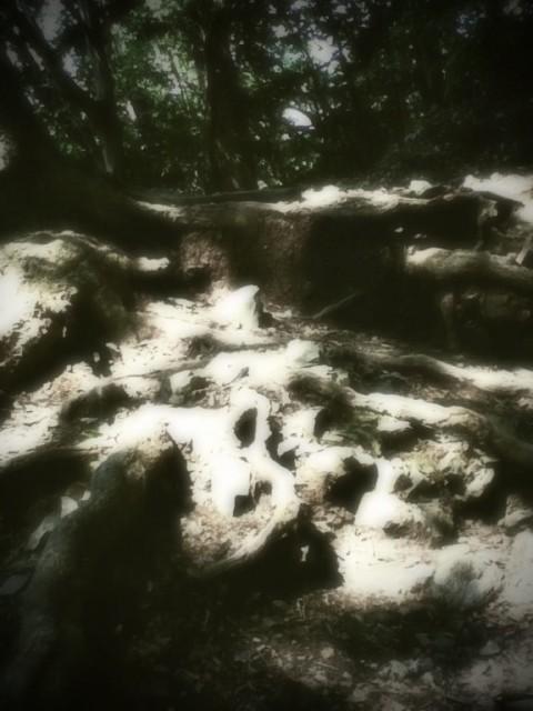 MountTakao-10.jpg
