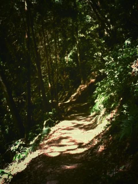 MountTakao-12.jpg