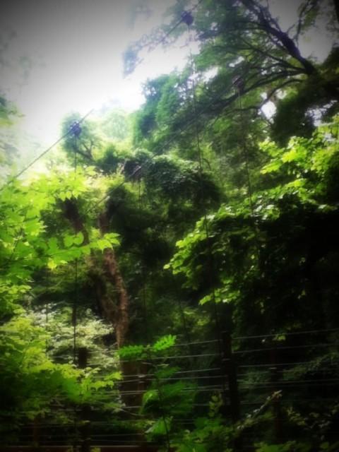 MountTakao-23.jpg