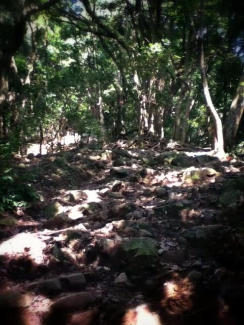 MountTakao-8.jpg