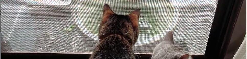 猫動画『メダカ睡蓮鉢のおそうじ見学』