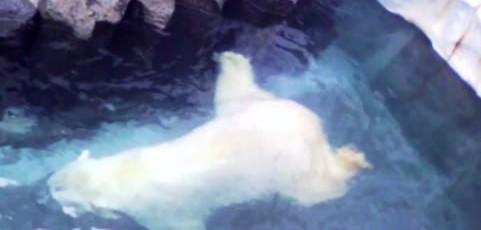 ムービー『シロクマ 泳いでぷはーっ! 上野動物園 其の6』を自作効果音で音効