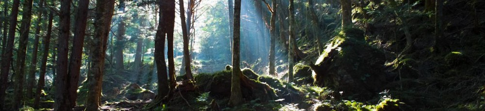 SIGMA DP1『父と息子の八ヶ岳1 -赤岳山荘→行者小屋-』