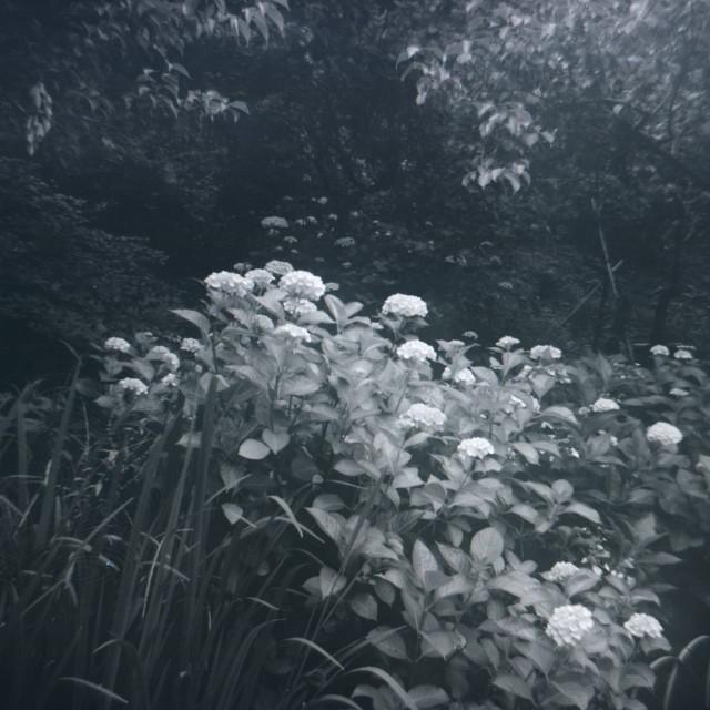 Fujipet_summer-1.jpg