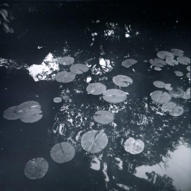 Fujipet_summer-2.jpg