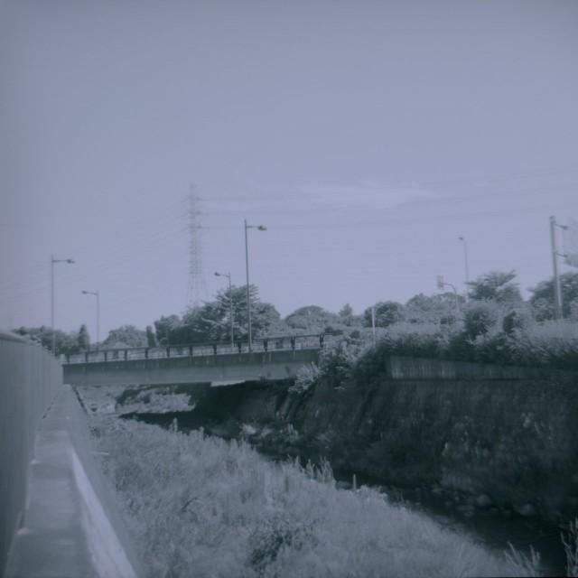 Fujipet_summer2-1.jpg