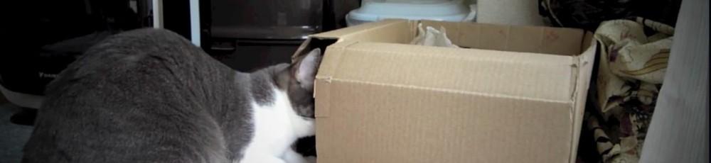 そこのスキマに なにか いるんよ…!(猫動画)