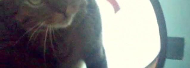 ネコトンネルでねずみちゃんパンチ(猫動画)