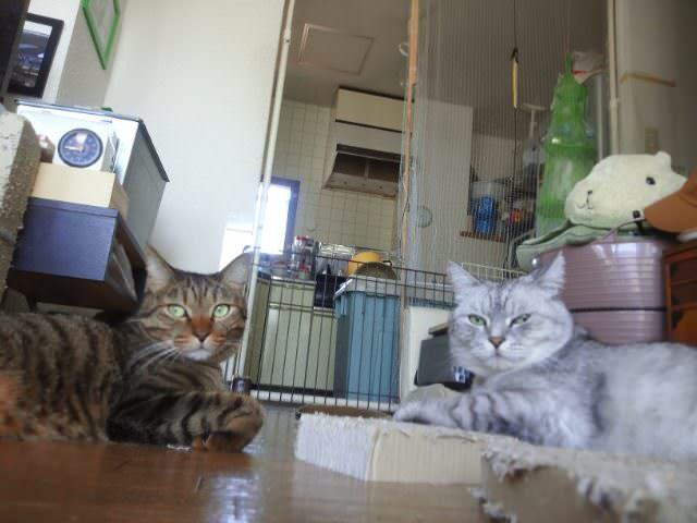 ca007_nekora20120912.jpg