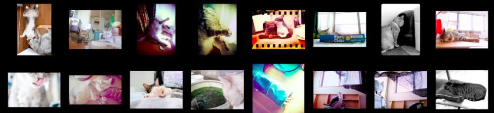猫ら写真まとめ 2012.09 @ necobitter
