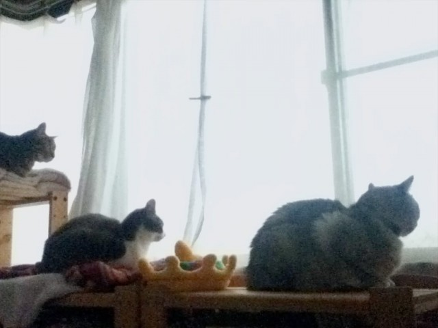 ipodtouch4g_cats-6.jpg