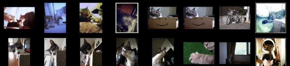 猫ら写真まとめ 2012.10 @ necobitter