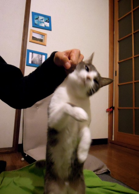 nikon_p300_nuzzling_cat-4.jpg