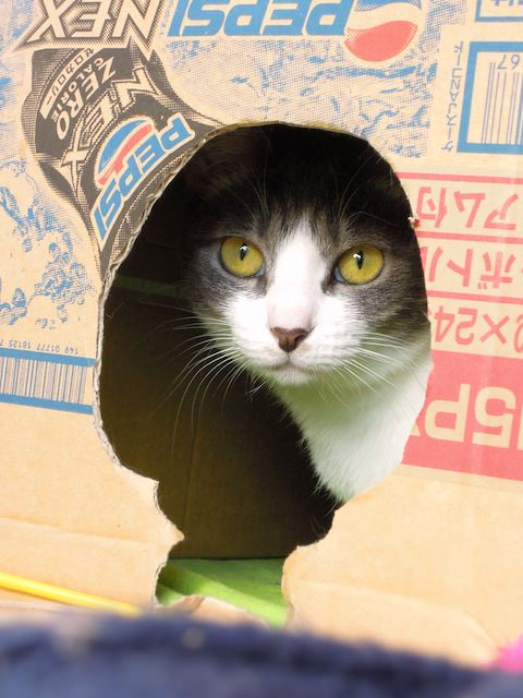 cats_and_box-1.jpg