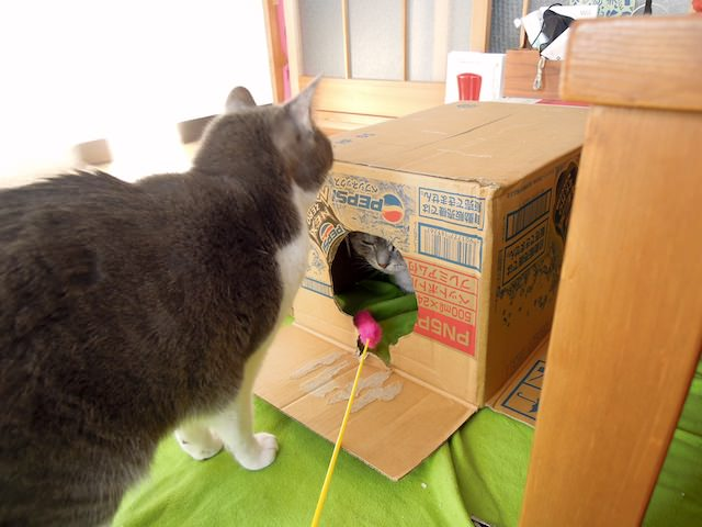 cats_and_box-4.jpg