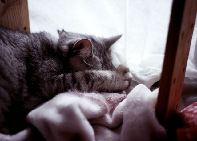 sorry_cats_klasse_s_sumannekora.jpg