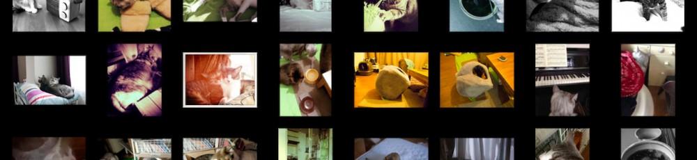 猫ら写真まとめ 2012.11 @ necobitter