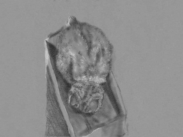 cat_3ds_sketch_20130131.jpg