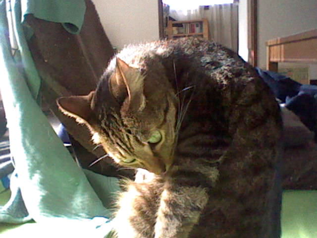 cat_3ds_photo_20130202.jpg