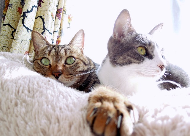 nikon_p300_cats_warm-1.jpg