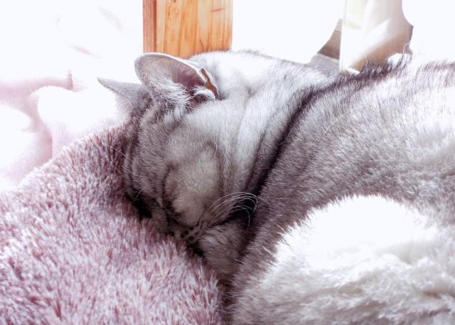 nikon_p300_cats_warm-11.jpg