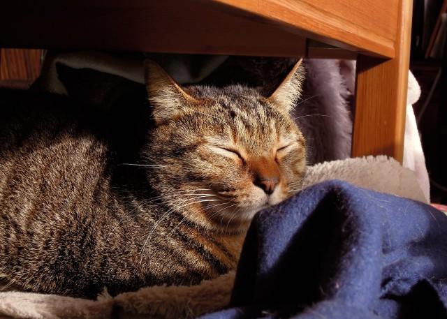 nikon_p300_cats_warm-12.jpg