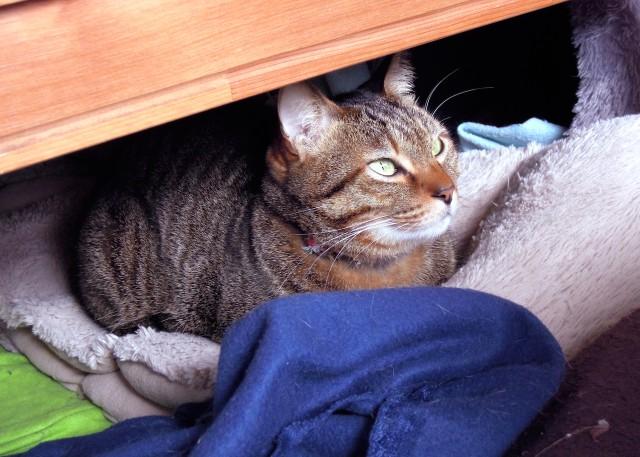 nikon_p300_cats_warm-13.jpg