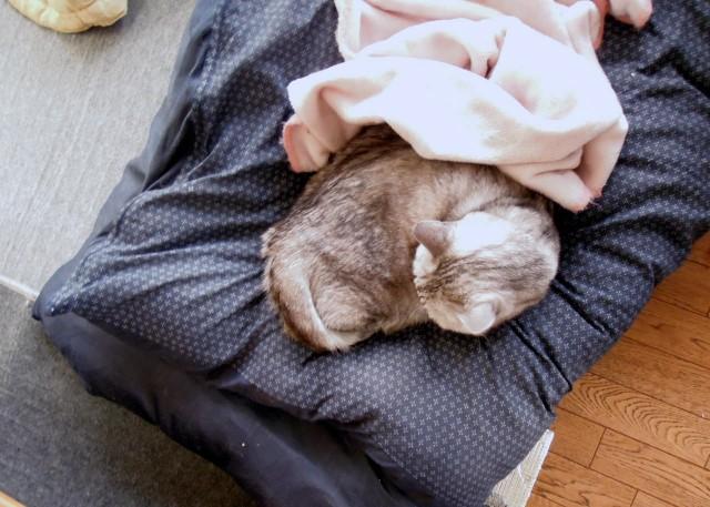 nikon_p300_cats_warm-14.jpg