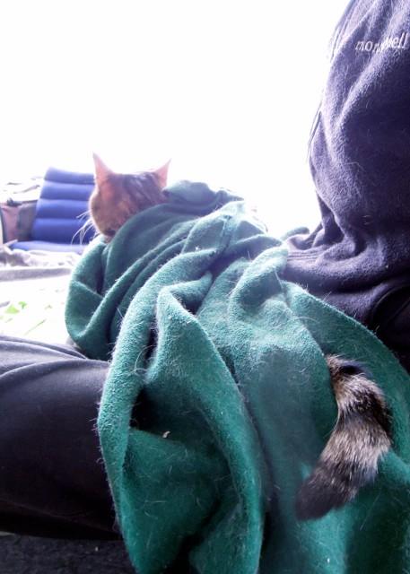 nikon_p300_cats_warm-2.jpg