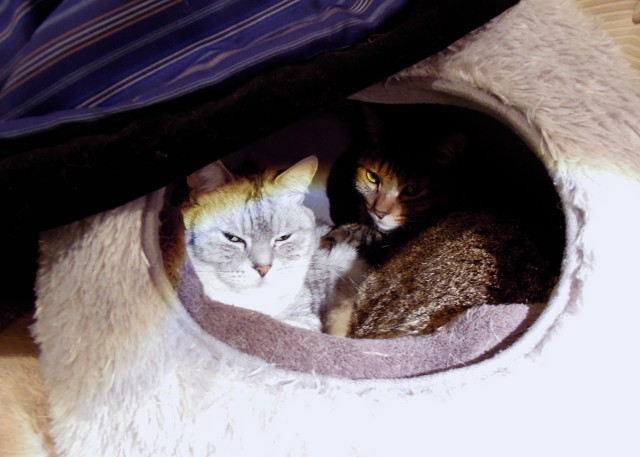 nikon_p300_cats_warm-3.jpg